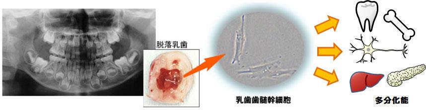 小児口腔医学分野素材
